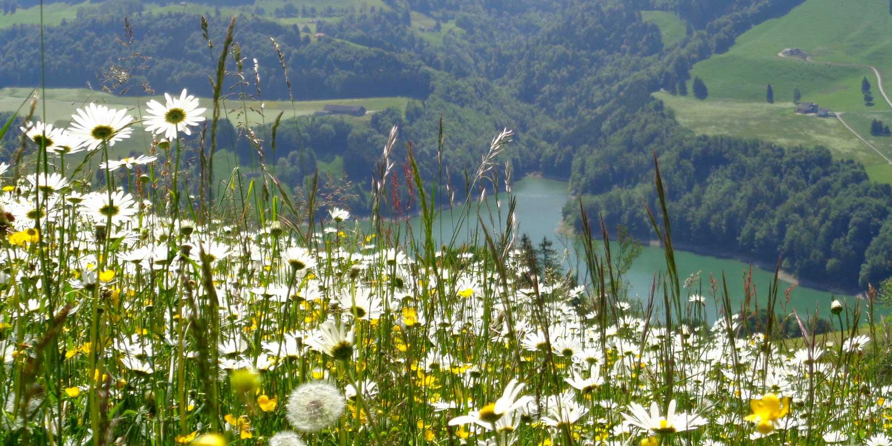 Montsalvens fleurs